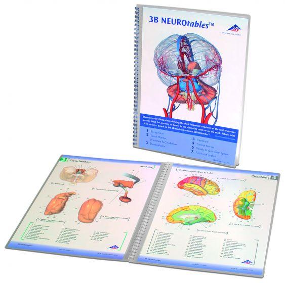 Planche anatomique 3B NEUROtables S0290
