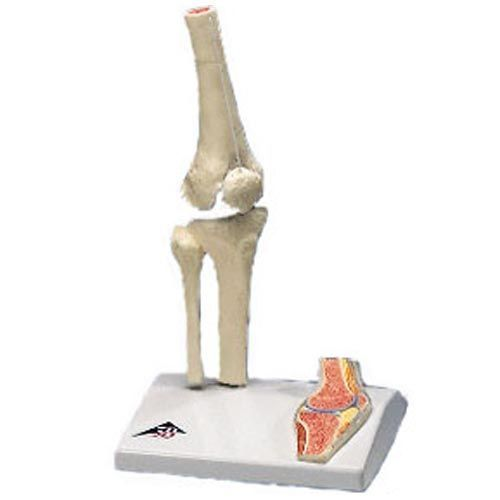 Mini Knee Joint with cross section A85/1